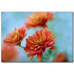 Turuncu Çiçekler Temalı Kanvas Tablo