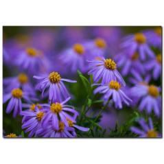Mor Çiçekler Temalı Kanvas Tablo