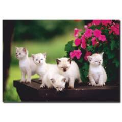 Yavru Kedi Temalı Kanvas Tablo