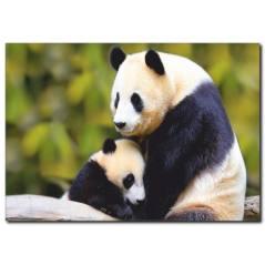 Panda Temalı Kanvas Tablo