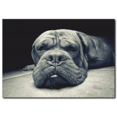 Miskin Köpek Temalı Kanvas Tablo