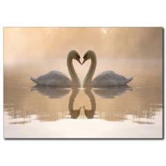 Kuğu Sevgisi Temalı Kanvas Tablo