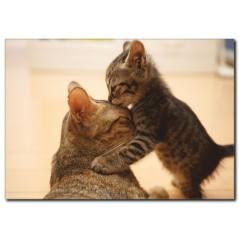 Kedi Yavruları Temalı Kanvas Tablo