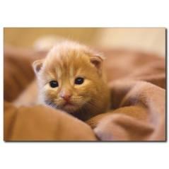 Uykucu Kedi Temalı Kanvas Tablo