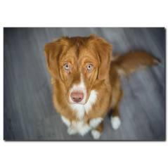 Güzel Köpek Temalı Kanvas Tablo
