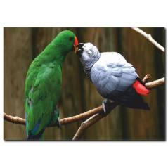 Papağan Temalı Kanvas Tablo