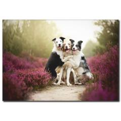 Köpeklerin Dostluğu Temalı Kanvas Tablo