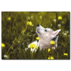 Mavi Gözlü Köpek Temalı Kanvas Tablo