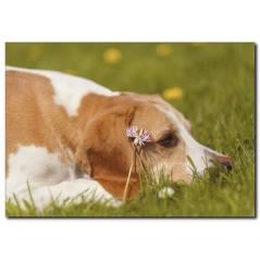 Yorgun Köpek Temalı Kanvas Tablo