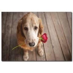 Duygusal Köpek Temalı Kanvas Tablo