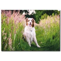 Beyaz Köpek Temalı Kanvas Tablo