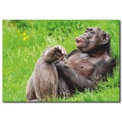 Dil Çıkaran Goril Temalı Kanvas Tablo
