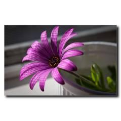Yalnız Çiçek Temalı Kanvas Tablo C1002