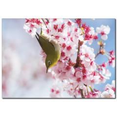 Çiçeğe Konan Kuş Temalı Kanvas Tablo