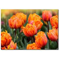 Turuncu Çiçek Temalı Kanvas Tablo