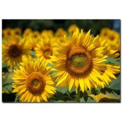 Sarı Çiçekler Temalı Kanvas Tablo