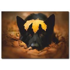 Sevimli Köpek Temalı Kanvas Tablo B1033