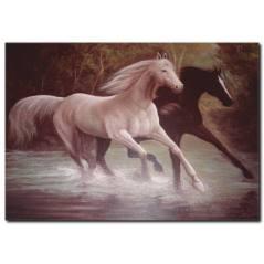 Siyah Beyaz At Yağlı Boya Tablo