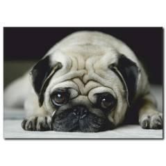 Üzgün Suratlı Köpek Temalı Kanvas Tablo