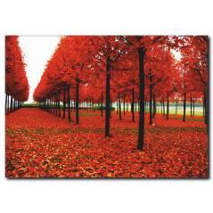 Kırmızı Yaprak ve Ağaçlar Temalı kanvas Tablo