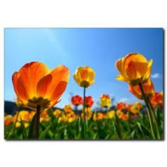 İlkbahar Çiçekleri Manzaralı Kanvas Tablo