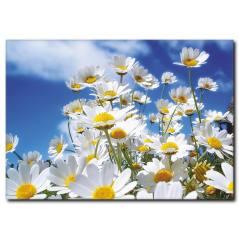 Papatya Çiçekleri ve İlkbahar Kanvas Tablo