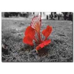 Kırmızı Çiçek Detaylı Siyah Beyaz Tablo