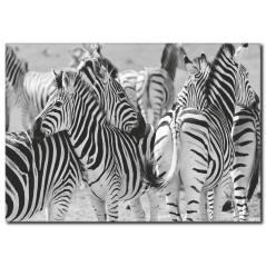 Zebra Temalı Kanvas Tablo