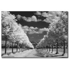 Ağaçlı Yollar Kanvas Tablo
