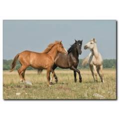 Doğa ve Atlar Temalı Kanvas Tablo