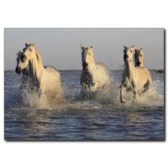 Sahilde Koşan Beyaz Atlar Kanvas Tablo