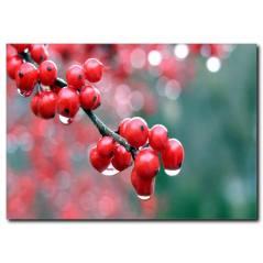 Kırmızı Meyveler Temalı Kanvas Tablo